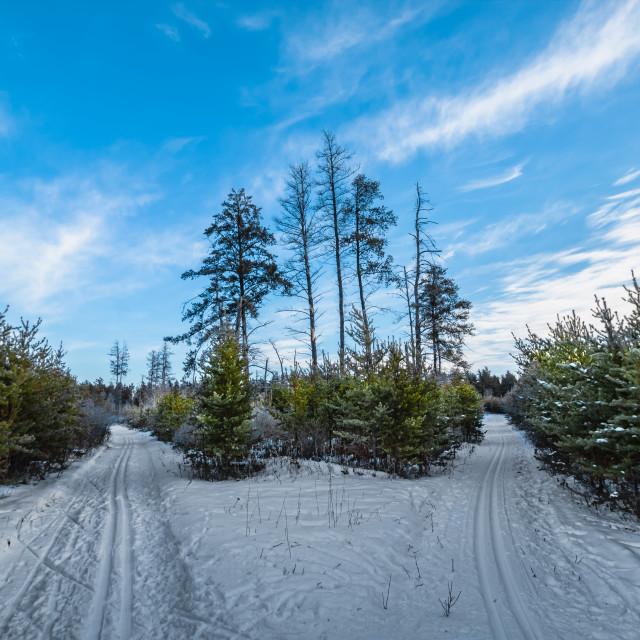 """Ski Trails Fork"" stock image"