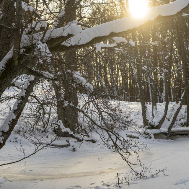 """Frozen river in sunshine"" stock image"