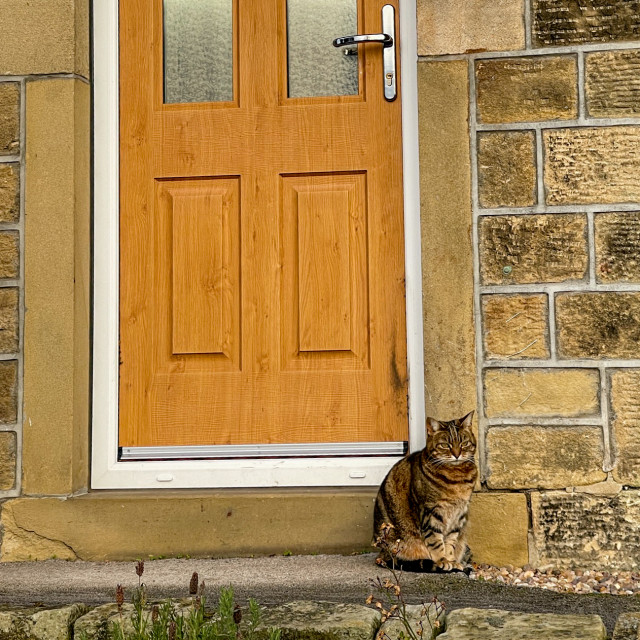 """""""Cat Sitting Waiting Outside by Door, Early Morning."""" stock image"""