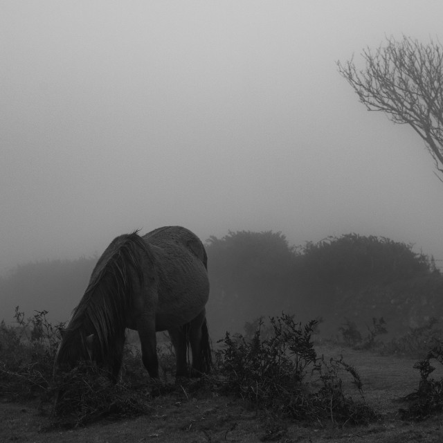 """""""Horses in the Mist"""" stock image"""