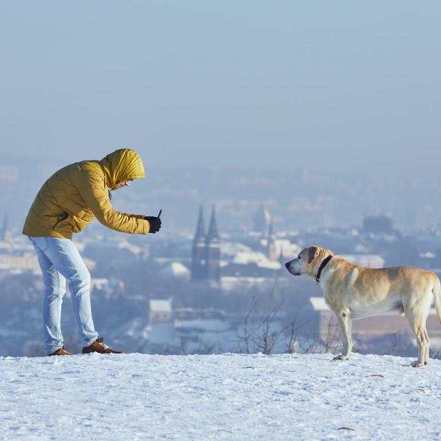 """Pet owner taking photo of his labrador retriever via smart phone"" stock image"