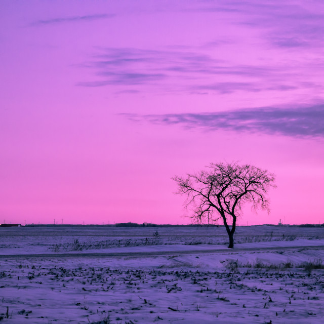 """Purple dawn"" stock image"