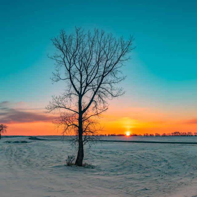 """""""Winter in the Prairies"""" stock image"""