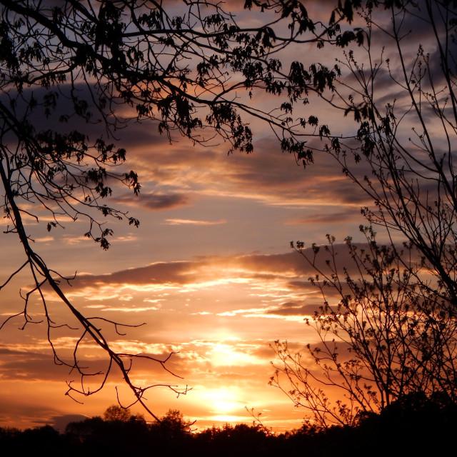 """Lavender and Orange Sunset"" stock image"