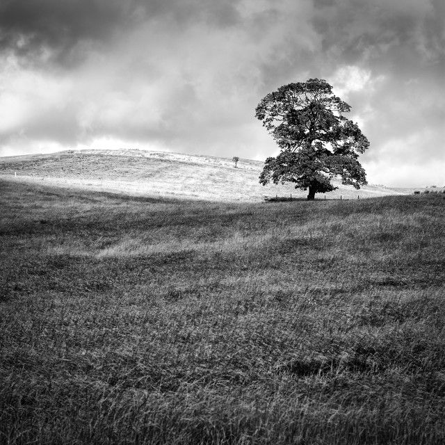 """Lone Tree - North Yorkshire"" stock image"