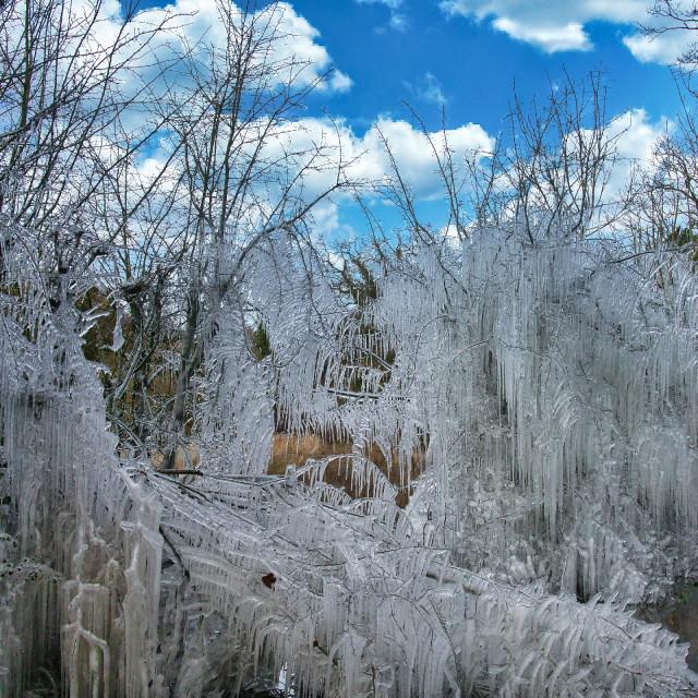 """""""Ice Trees"""" stock image"""