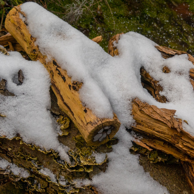 """Snow on logs"" stock image"