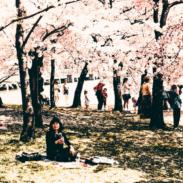 """""""Cherry Blossom Queen"""" stock image"""