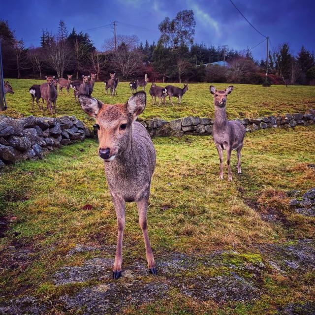 """""""Deer & Co."""" stock image"""
