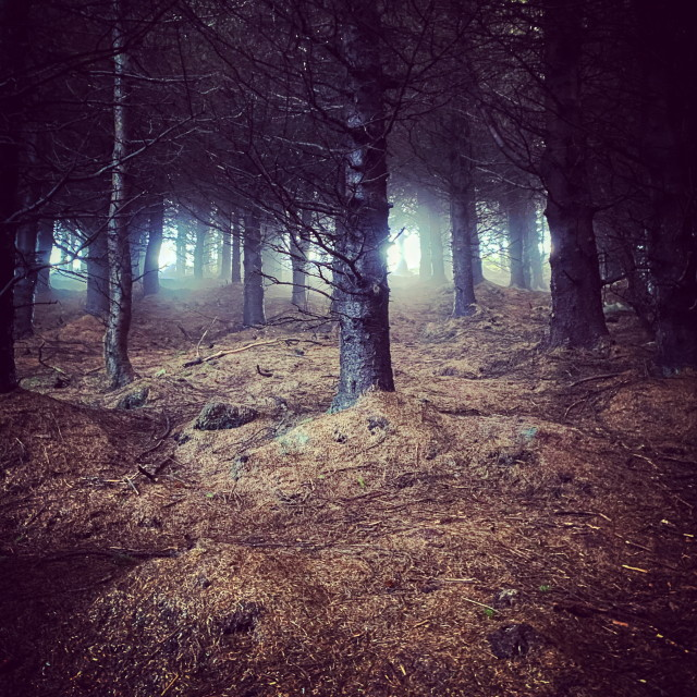 """""""The Enchanted Forest"""" stock image"""