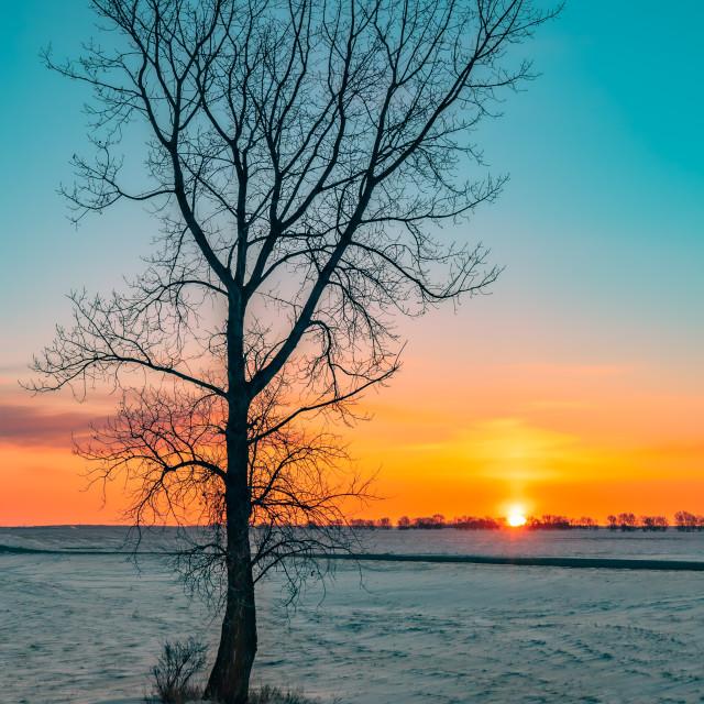 """Sunrise in the Prairies Panorama (panel 2 of 3, center)"" stock image"