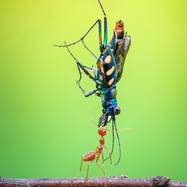 """""""The power of ant"""" stock image"""