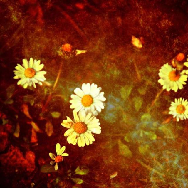 """""""Wild flowers."""" stock image"""