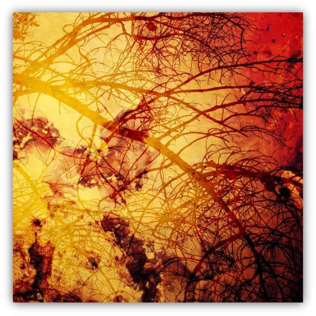 """""""Abstract nature"""" stock image"""