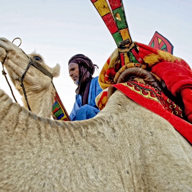"""Touareg man and camels; near Timbuktu, Mali"" stock image"