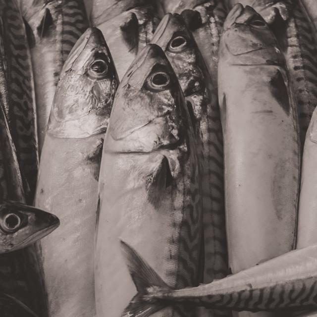 """Scandinavian Mackerel"" stock image"