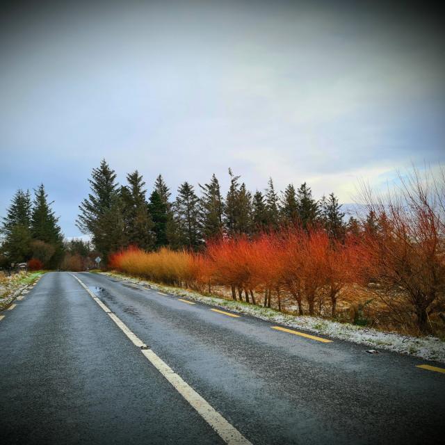 """Autumn colours!"" stock image"