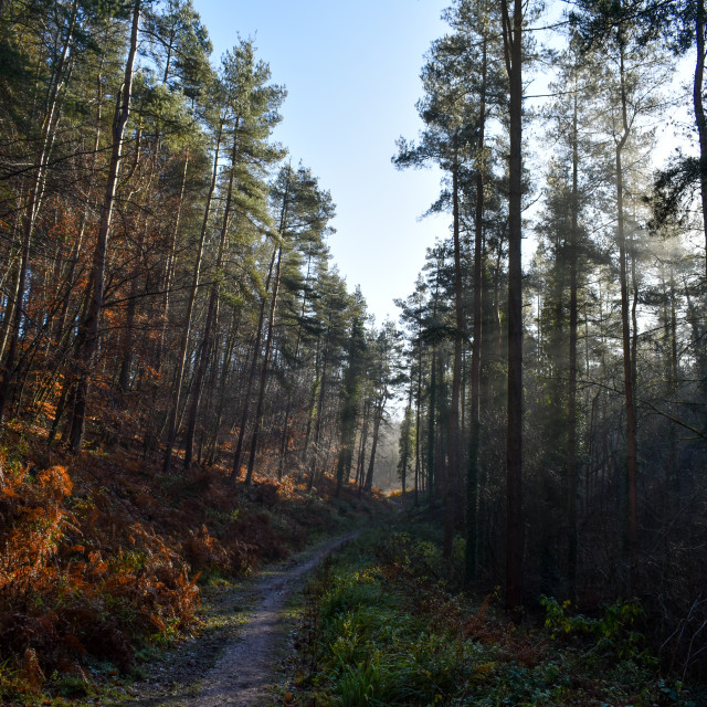 """""""The Misted Forest Track #1"""" stock image"""