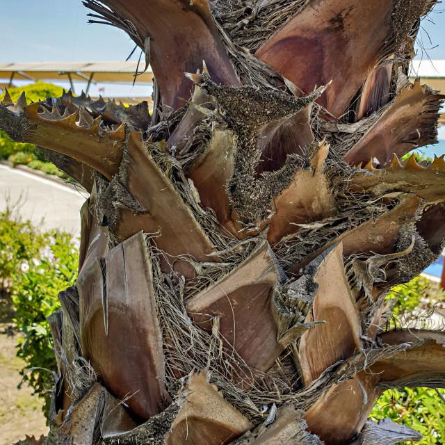 """Palm tree on Turkish coast"" stock image"