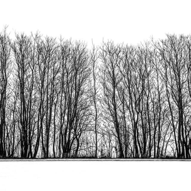 """Winter tree line silhouette"" stock image"