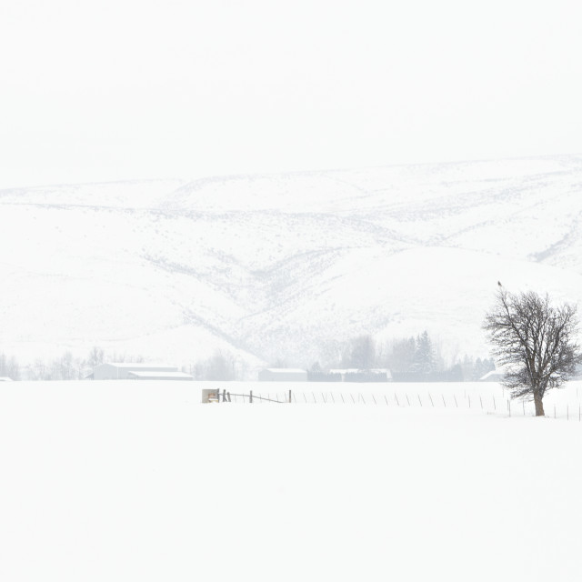 """Snow meadow"" stock image"