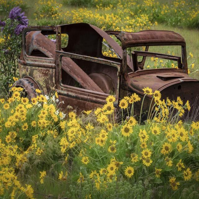 """Rusty flower pot"" stock image"