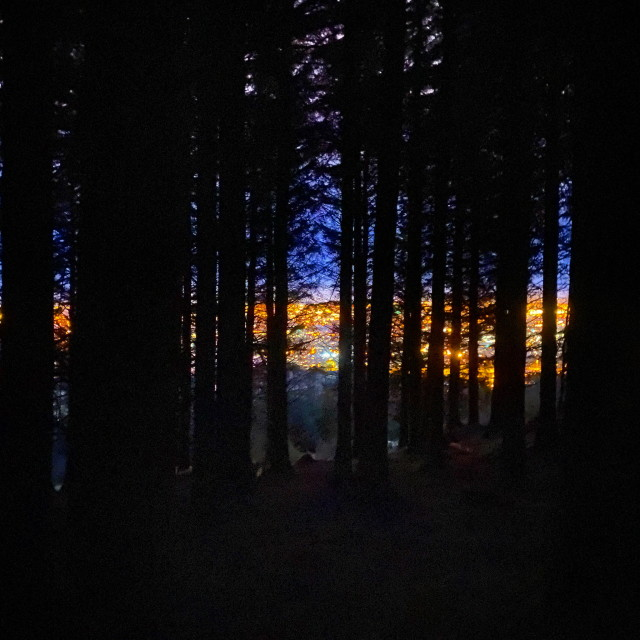 """""""Behind the Pines"""" stock image"""
