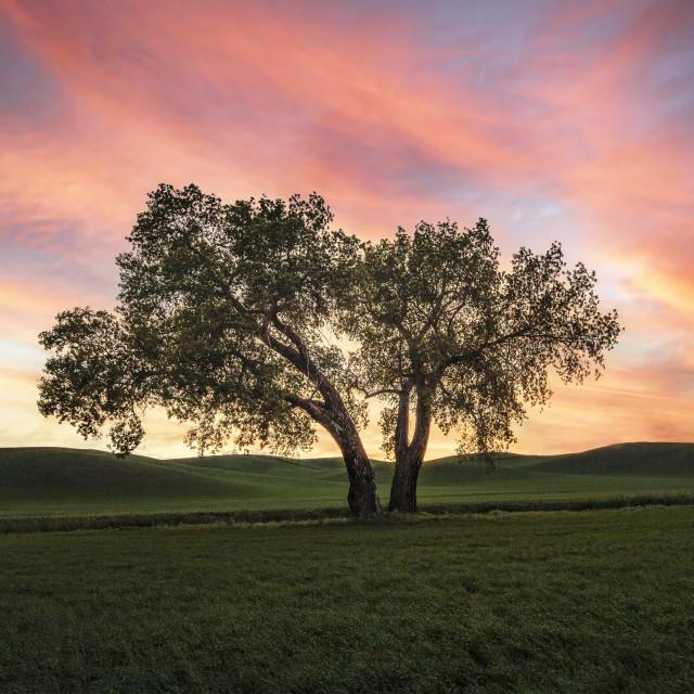 """""""Palouse sunset"""" stock image"""