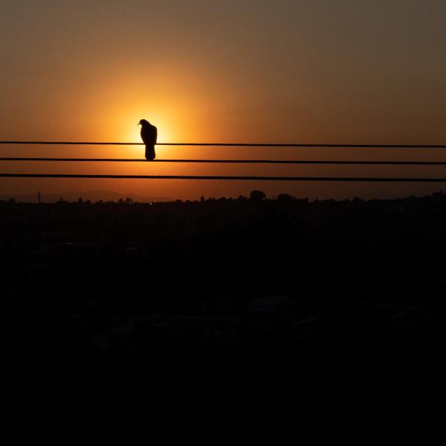 """""""Bird on a wire in San Miguel de Allende, Guanajuato, Mexico"""" stock image"""