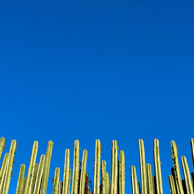 """""""Cactus in San Miguel de Allende, Guanajuato, Mexico"""" stock image"""