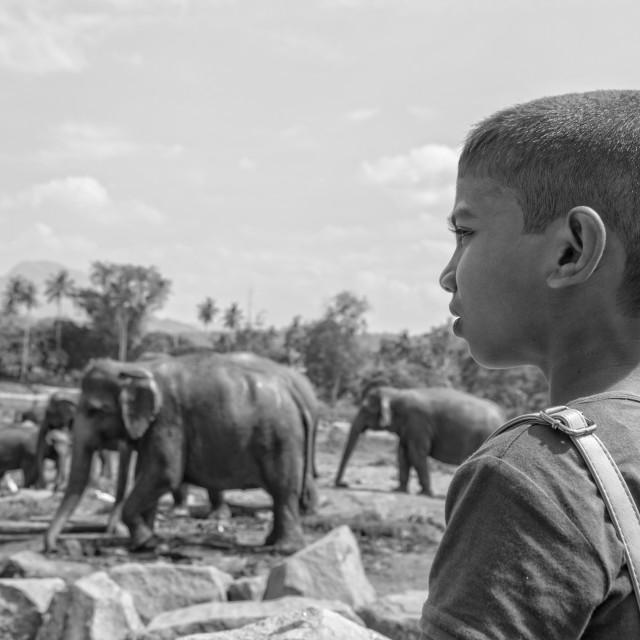 """Elephant farm"" stock image"