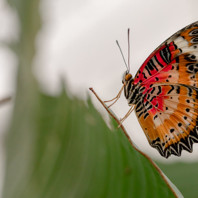 """""""Butterfly at Rest"""" stock image"""