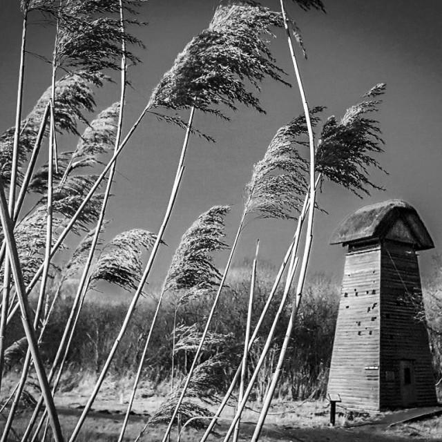 """""""Wicken Fen Tower Hide"""" stock image"""