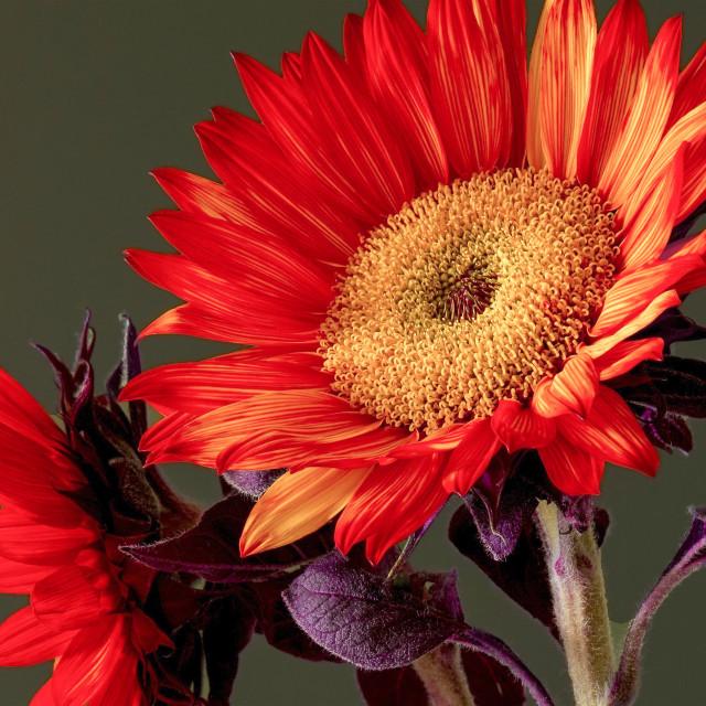 """Orange beauty"" stock image"