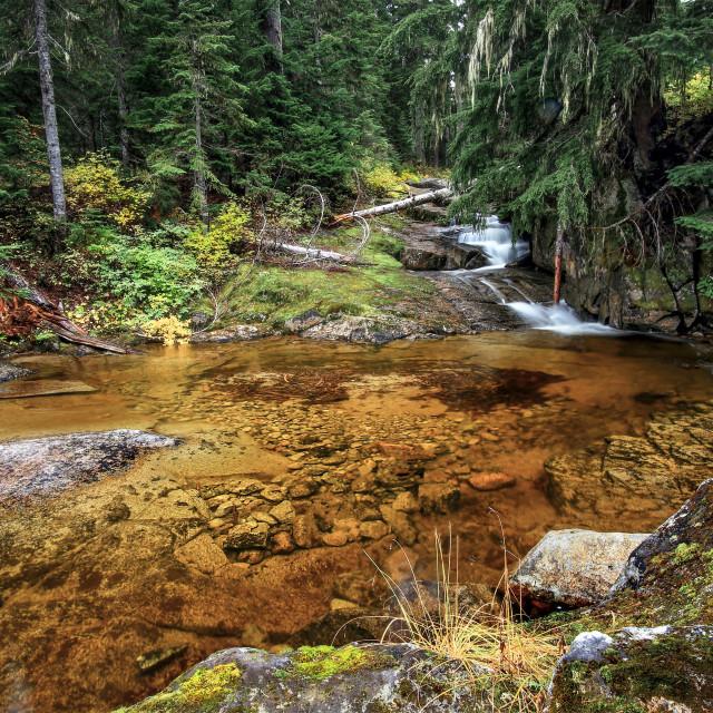 """Golden pond"" stock image"