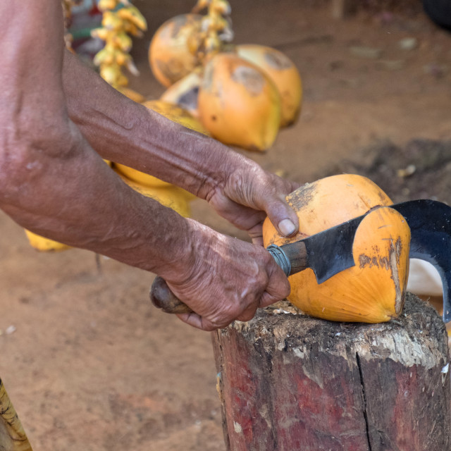 """""""Man opening coconut shell"""" stock image"""
