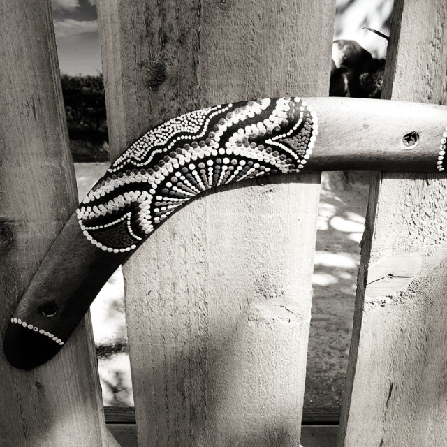 """Boomerang spotted at Paradise Wildlife Park, Broxbourne"" stock image"