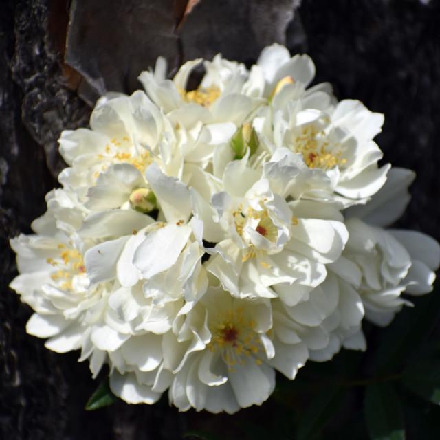 """Tree Bark Flowers"" stock image"