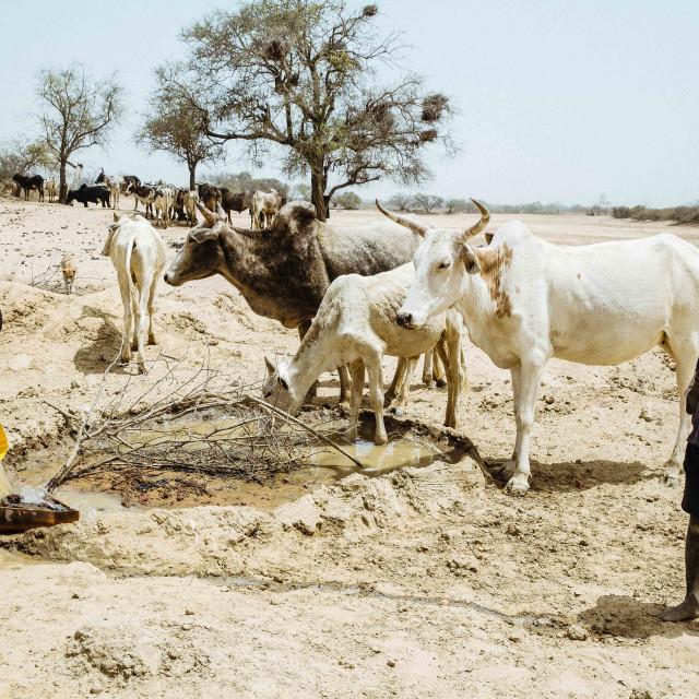 """Water Hole in the Sahel Zone, Burkina Faso"" stock image"