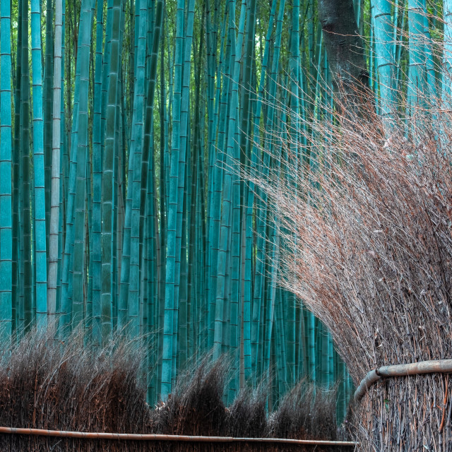 """""""Bamboo Forest in Arashiyama, Kyoto, Japan"""" stock image"""