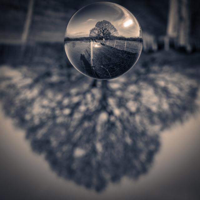 """Tree through crystal ball"" stock image"