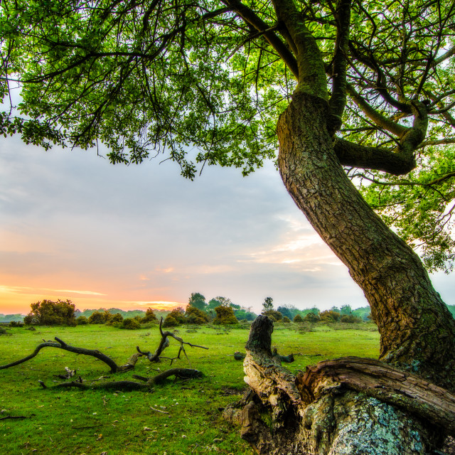 """""""Sunrise in the New Forest"""" stock image"""