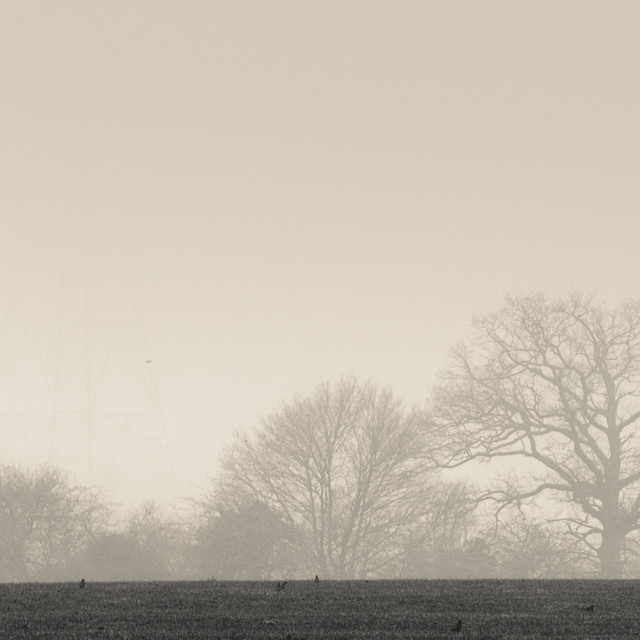 """""""Bare trees in fog, Hampshire"""" stock image"""