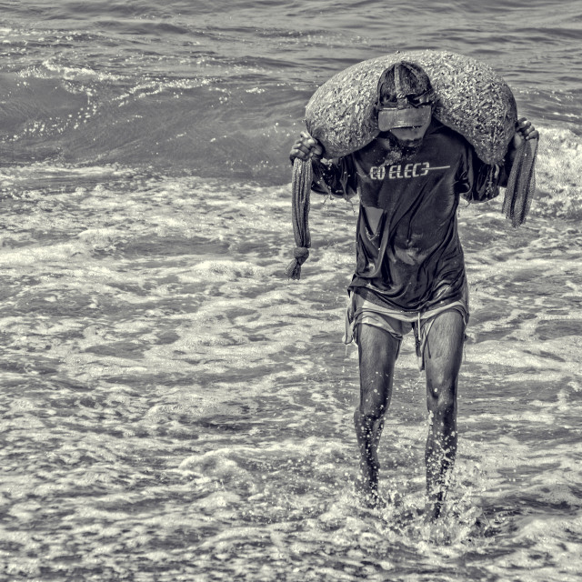 """""""Fisherman carrying fish from boat to Negombo beach"""" stock image"""