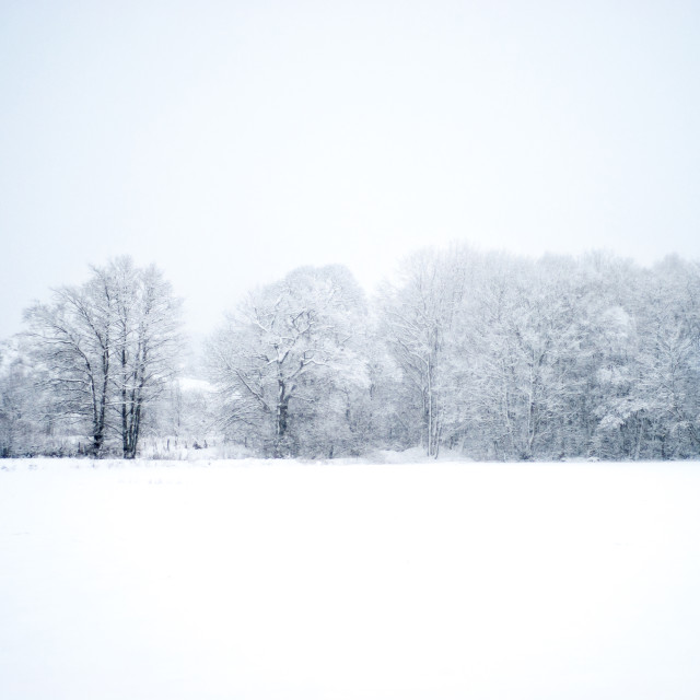 """""""Snow covered tree line, Dundee"""" stock image"""