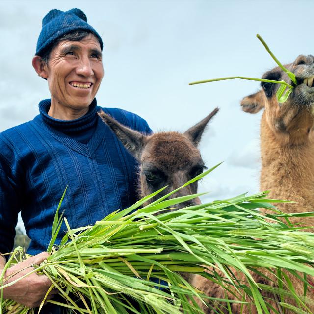 """Peruvian Farmer"" stock image"