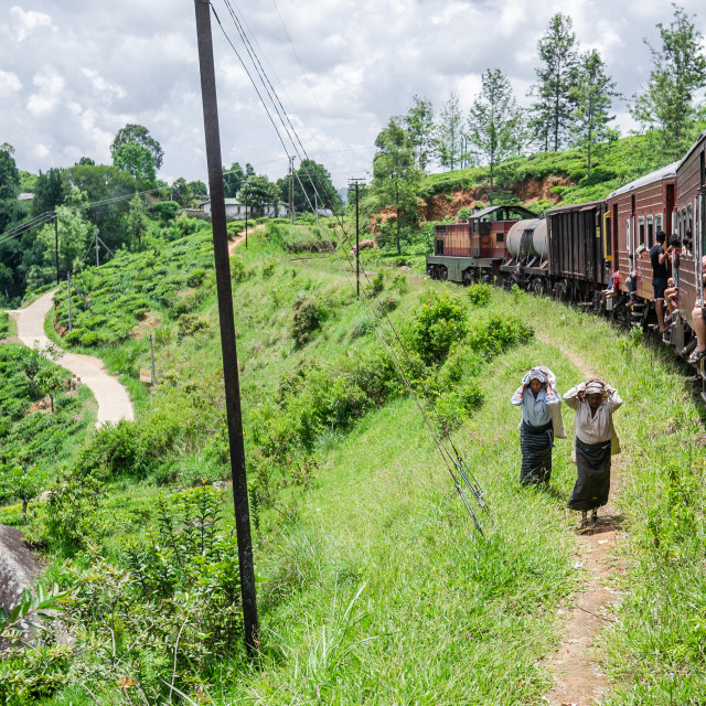 """Tea pickers and train"" stock image"