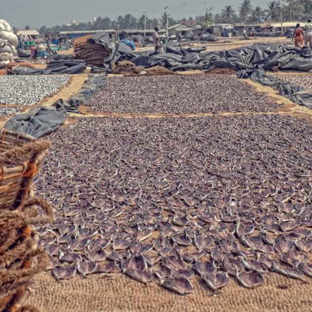 """""""Drying Fish in Sri Lanka"""" stock image"""