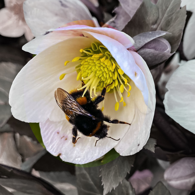 """""""Bee on a flower"""" stock image"""