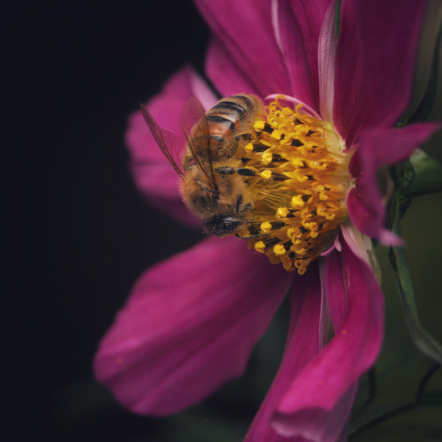 """Pretty flower with Bee"" stock image"